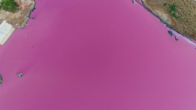 """Cận cảnh đầm nước màu hồng vì bị """"uống nước thải"""" - Ảnh 3."""