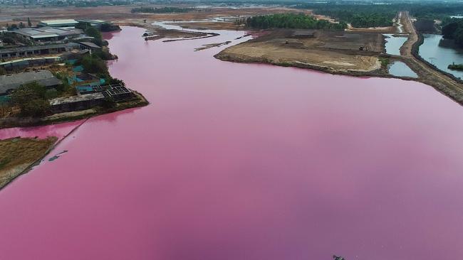 """Cận cảnh đầm nước màu hồng vì bị """"uống nước thải"""" - Ảnh 5."""