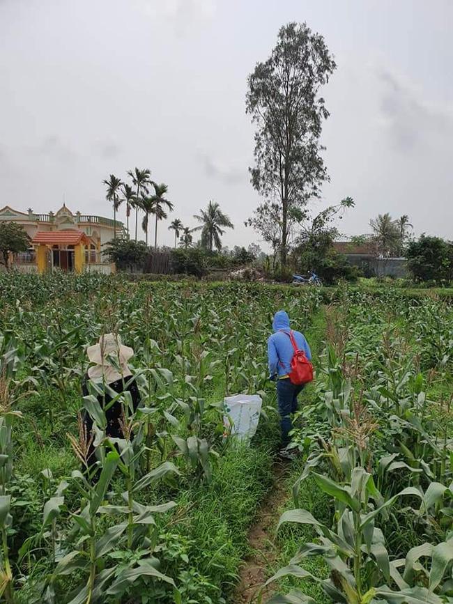 Tiên Lãng, Hải Phòng: Hiệu quả kinh tế từ trồng cây có hạt dẻo lại thơm - Ảnh 5.