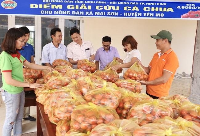 """Ninh Bình: Hội Nông dân """"giải cứu"""" hơn 3 tấn cà chua cho nông dân xã Mai Sơn - Ảnh 2."""