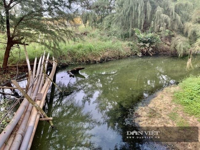 """Quảng Bình: """"Nhức nhối"""" tình trạng hồ tôm xả thải gây ô nhiễm, cá chết nổi lềnh bềnh - Ảnh 6."""