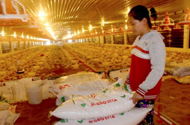 """Giá thức ăn chăn nuôi tăng """"chóng mặt"""", người chăn nuôi lo…. khó cầm cự - Ảnh 2."""