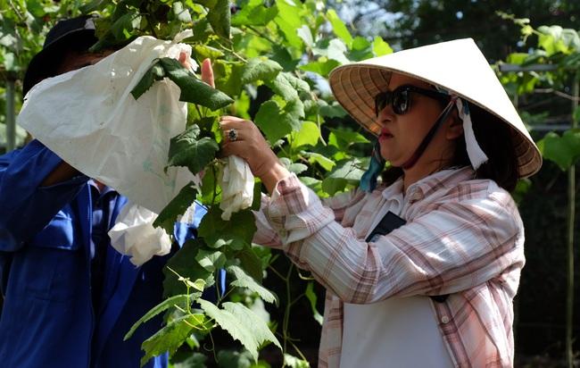 """Trồng 6 giống nho Nhật Bản, nữ chủ vườn """"hái bộn tiền"""" - Ảnh 1."""