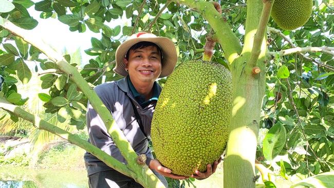 Giá mít Thái hôm nay 12/4: Làm thế nào để cây mít ra nhiều trái mít Nhất, giá mít Thái nơi tăng, nơi giảm?