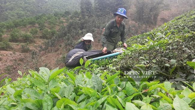 Yên Bái: Những nông dân từng gặp thất bại nay mô hình cho thu nhập vài trăm triệu mỗi năm - Ảnh 2.