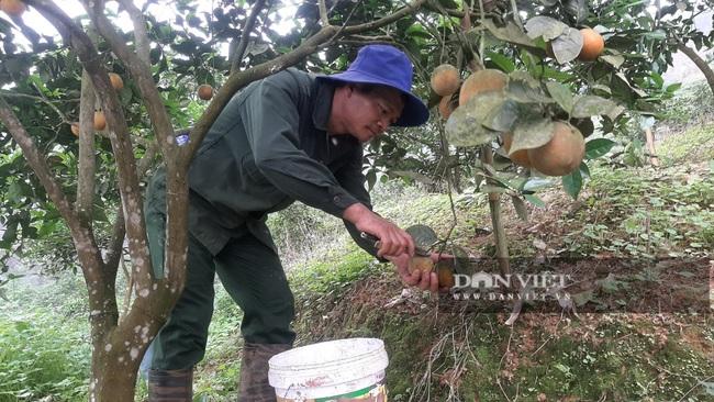 Yên Bái: Những nông dân từng gặp thất bại nay mô hình cho thu nhập vài trăm triệu mỗi năm - Ảnh 1.