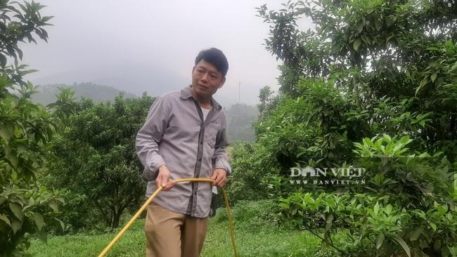 Yên Bái: Những nông dân từng gặp thất bại nay mô hình cho thu nhập vài trăm triệu mỗi năm - Ảnh 4.