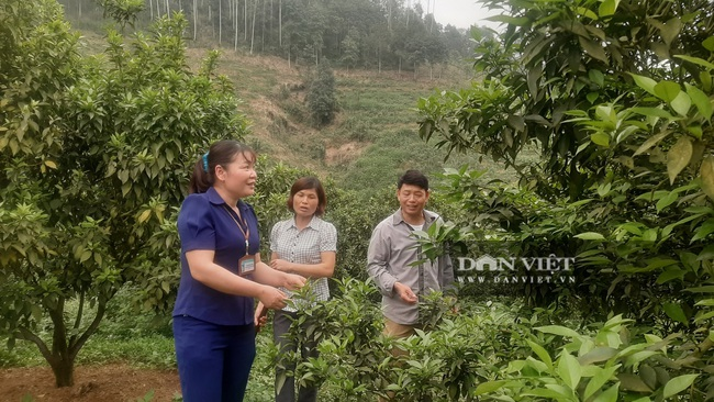 Yên Bái: Những nông dân từng gặp thất bại nay mô hình cho thu nhập vài trăm triệu mỗi năm - Ảnh 5.