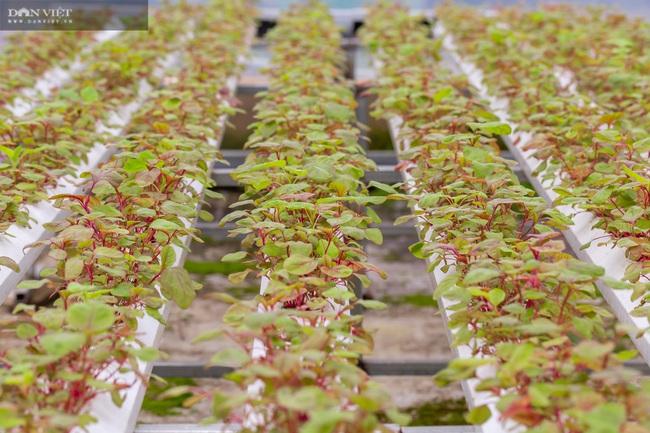 8X Đà Nẵng khởi nghiệp thành công với vườn rau thông minh 4.0 đầu tiên tại Việt Nam - Ảnh 4.