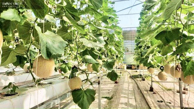 8X Đà Nẵng khởi nghiệp thành công với vườn rau thông minh 4.0 đầu tiên tại Việt Nam - Ảnh 5.