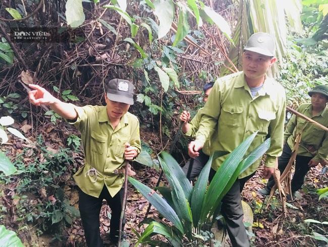 Những người thầm lặng bảo vệ rừng Khe Bu - Ảnh 2.