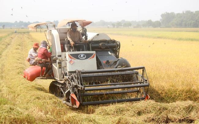 """Cổ phiếu ngành gạo kỳ vọng """"bứt phá"""" với những ưu đãi thuế quan từ các FTA - Ảnh 3."""