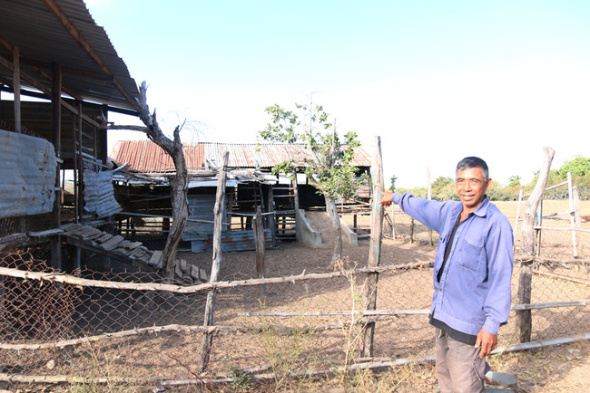 Ninh Thuận: Dân khổ vì dự án chăn nuôi bò cao sản sau 5 năm vẫn nằm trên giấy - Ảnh 2.