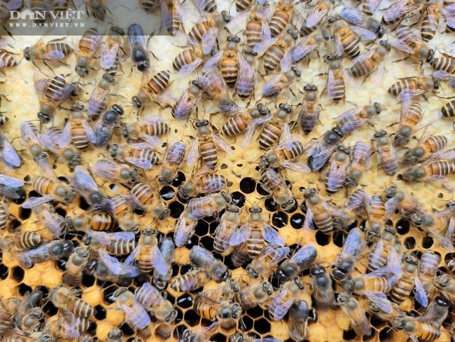 """Nuôi loài côn trồng lấy mật, lão nông Hà Tĩnh """"bỏ túi"""" hàng trăm triệu mỗi năm - Ảnh 5."""