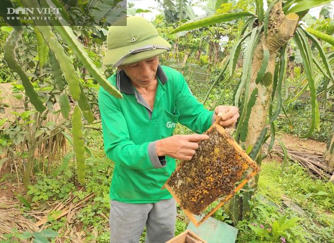 """Nuôi loài côn trồng lấy mật, lão nông Hà Tĩnh """"bỏ túi"""" hàng trăm triệu mỗi năm - Ảnh 4."""