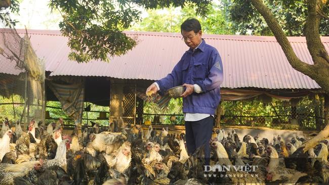 Hà Nội: Nuôi giống gà đặc sản thả rông trên đồi, chân không chì, thịt, xương đen sì, dân ở đây khấm khá  - Ảnh 1.