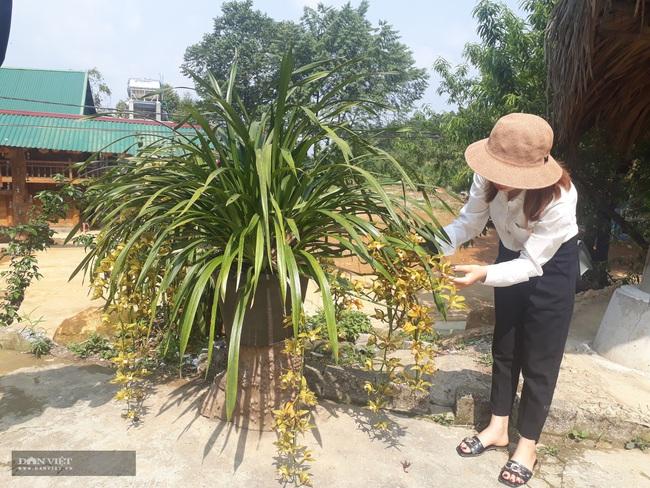 Lên Sin Suối Hồ xem người Mông làm du lịch - Ảnh 2.