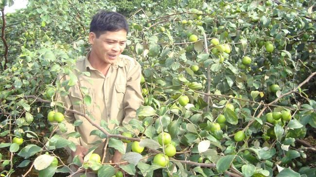 Trồng táo Đài, nuôi chim câu, nông dân nhanh khấm khá - Ảnh 1.
