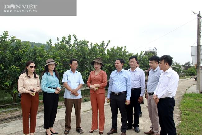 Đoàn công tác Hội Nông dân Việt Nam thăm mô hình sản xuất nông nghiệp tại Hà Tĩnh - Ảnh 1.