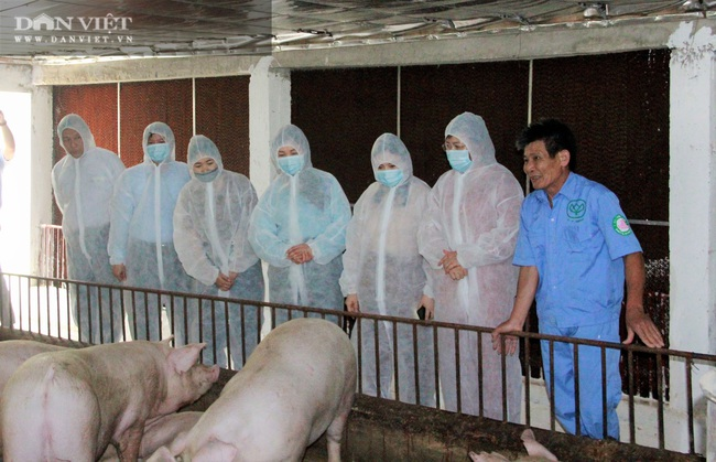 Đoàn công tác Hội Nông dân Việt Nam thăm mô hình sản xuất nông nghiệp tại Hà Tĩnh - Ảnh 3.