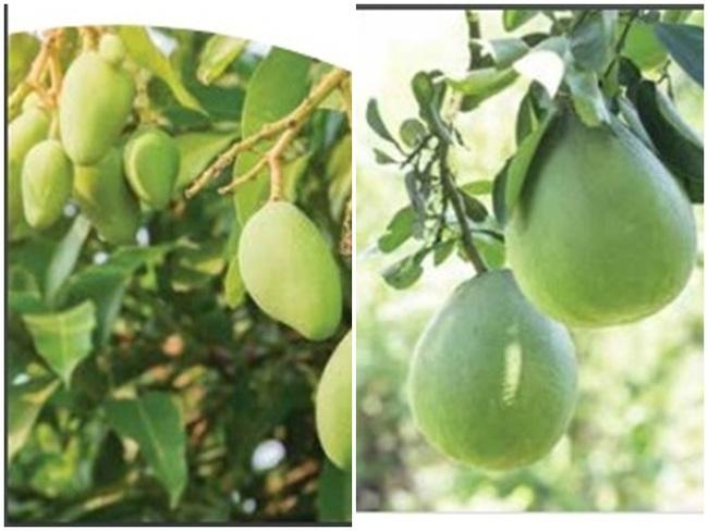 Hà Lan hỗ trợ Việt Nam dự án phát triển ngành ươm giống và thích ứng với biến đổi khí hậu cho nông nghiệp ĐBSCL - Ảnh 3.