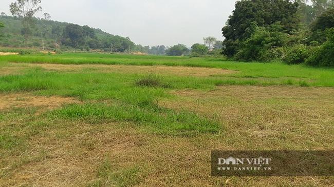 Hà Tĩnh: Nông dân bất lực nhìn ruộng bị vùi lấp sau mỗi trận mưa - Ảnh 3.