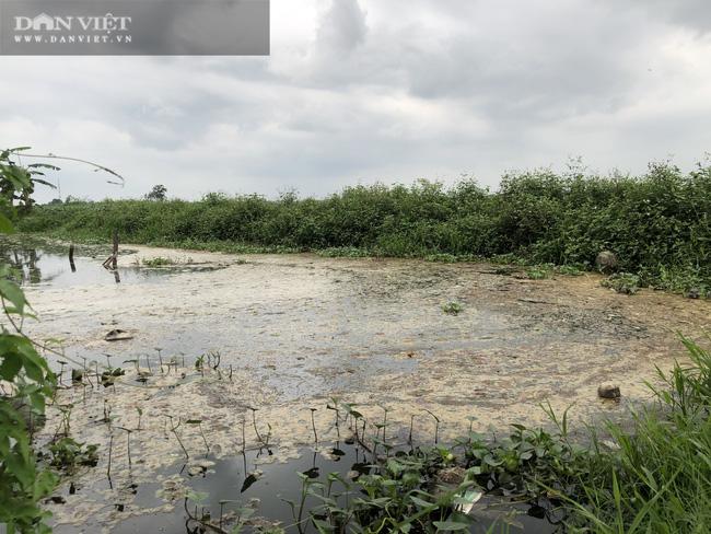 Bắc Ninh: Nước thải như luyn từ doanh nghiệp giấy Phú Lâm làm cá chết hàng hoạt - Ảnh 3.