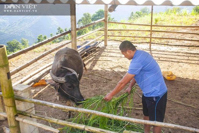 Lai Châu: Bỏ nghề xây dựng về quê nuôi gia súc, anh nông dân này có thu nhập khá - Ảnh 1.