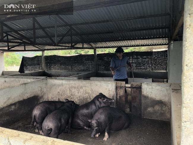 Lai Châu: Bỏ nghề xây dựng về quê nuôi gia súc, anh nông dân này có thu nhập khá - Ảnh 4.