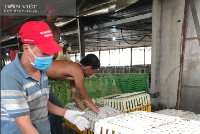 Giá gia cầm hôm nay 18/4: Vịt giữ giá cao 47.000 đồng/kg, gà trắng mất thêm 2 giá - Ảnh 3.