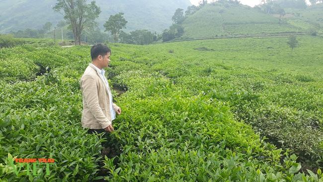 Lai Châu: Phát triển sản phẩm OCOP tạo động lực xây dựng nông thôn mới - Ảnh 1.