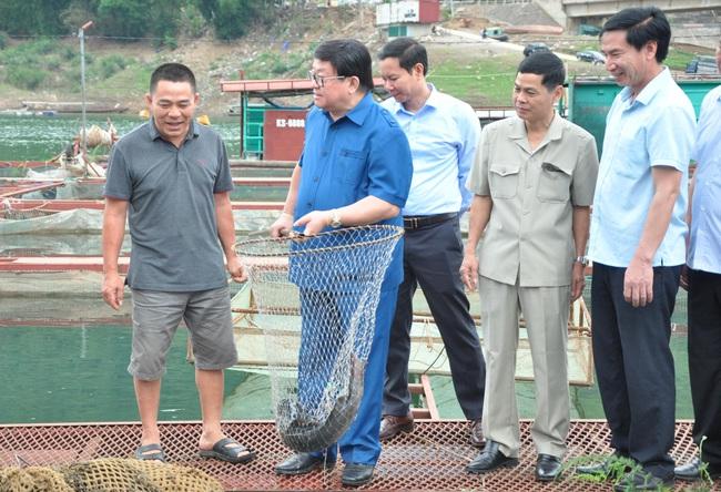 (Gop) Tỷ phú nuôi cá đặc sản dưới chân cầu Pá Uôn - Ảnh 1.