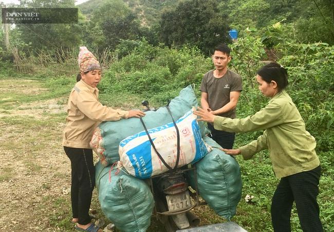 Ninh Bình: Trồng khoai môn Tam Đảo, lãi 8 triệu/sào - Ảnh 7.