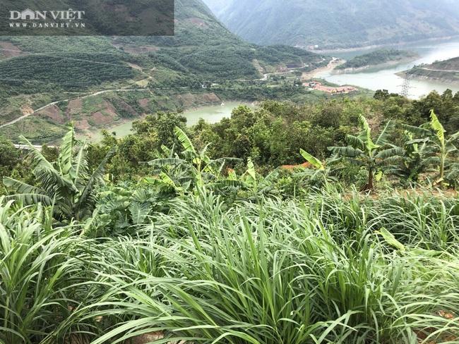 Lai Châu: Bỏ nghề xây dựng về quê nuôi gia súc, anh nông dân có thu nhập bình quân mỗi ngày 1 triệu đồng - Ảnh 2.