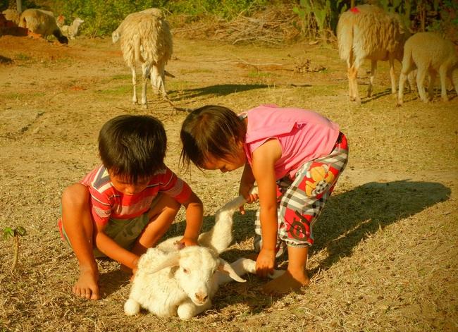 Đời du mục trên thảo nguyên (bài 3): Chuyện gia đình 20 năm chăn cừu  - Ảnh 3.
