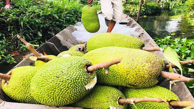Giá mít Thái hôm nay 2/4: Giá mít tiếp tục giảm, nông dân trồng mít Thái động viên nhau, chờ giá lên - Ảnh 1.