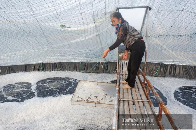 Thái Bình: Nuôi tôm dày đặc trên ao nổi, 1 năm nuôi 3 vụ, dân ở huyện ven biển này khá giả hẳn lên - Ảnh 1.