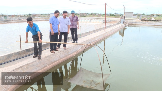 Thái Bình: Nuôi tôm dày đặc trên ao nổi, 1 năm nuôi 3 vụ, dân ở huyện ven biển này khá giả hẳn lên - Ảnh 6.