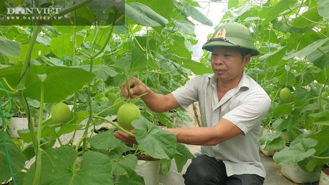 Bí kíp kiếm hàng trăm triệu/năm nhờ trồng dưa công nghệ cao của lão nông xứ Thanh - Ảnh 2.