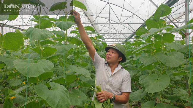 Bí kíp kiếm hàng trăm triệu/năm nhờ trồng dưa công nghệ cao của lão nông xứ Thanh - Ảnh 4.