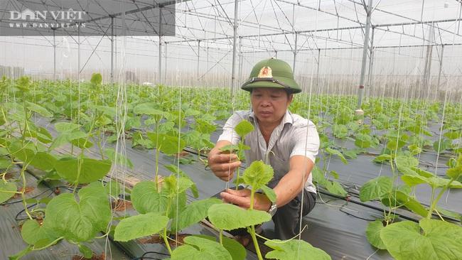 Bí kíp kiếm hàng trăm triệu/năm nhờ trồng dưa công nghệ cao của lão nông xứ Thanh - Ảnh 6.
