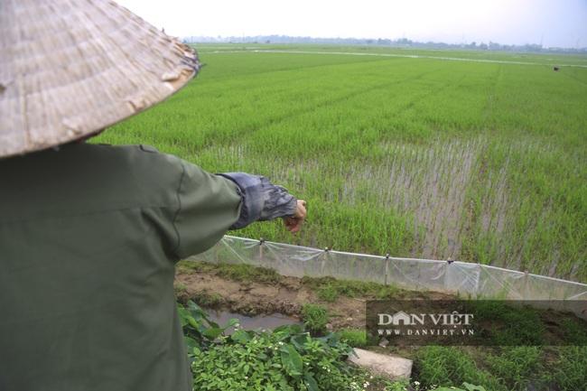 Đến vụ lúa người dân mang ni lông ra căng trắng đồng, cuối mùa thu hoạch không thiếu hạt nào - Ảnh 1.