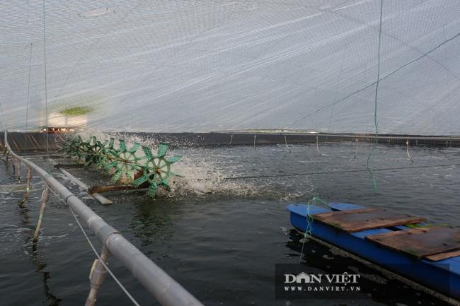 Thái Bình: Nuôi tôm dày đặc trên ao nổi, 1 năm nuôi 3 vụ, dân ở huyện ven biển này khá giả hẳn lên - Ảnh 3.