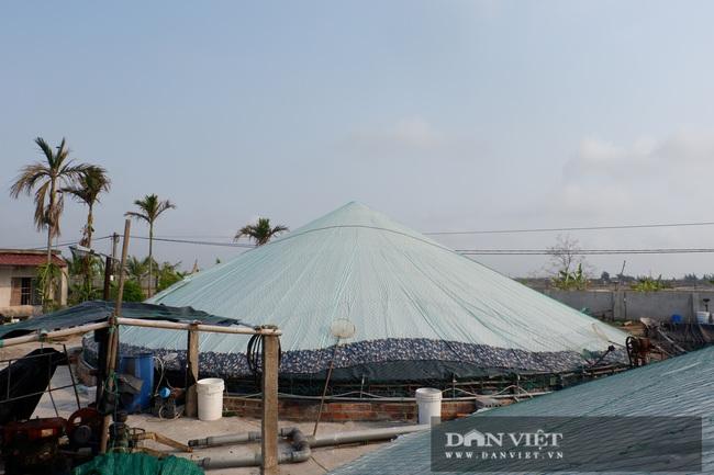 Thái Bình: Nuôi tôm dày đặc trên ao nổi, 1 năm nuôi 3 vụ, dân ở huyện ven biển này khá giả hẳn lên - Ảnh 4.
