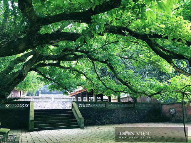 Nghệ An: Ngỡ ngàng trước vẻ đẹp của ngôi chùa cổ 800 năm tuổi nằm trên một hòn đảo ở Cửa Lò - Ảnh 4.