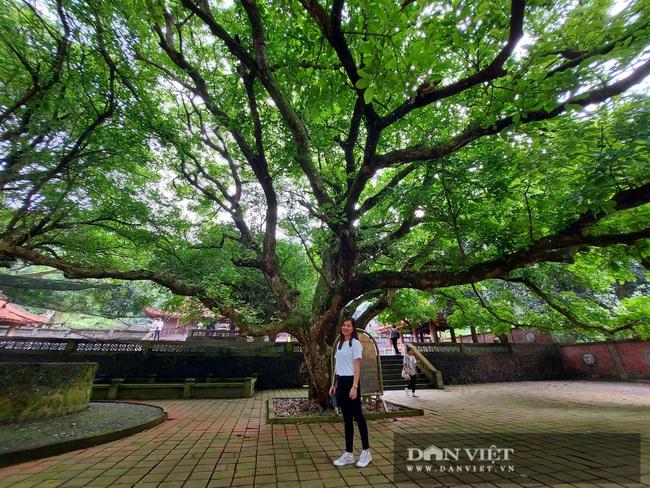 Nghệ An: Ngỡ ngàng trước vẻ đẹp của ngôi chùa cổ 800 năm tuổi nằm trên một hòn đảo ở Cửa Lò - Ảnh 16.