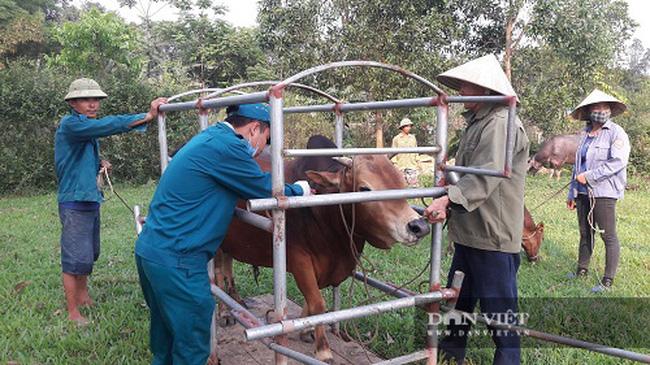 Hà Tĩnh: Hơn 115 nghìn con trâu, bò được tiêm phòng vắc-xin viêm da nổi cục - Ảnh 2.