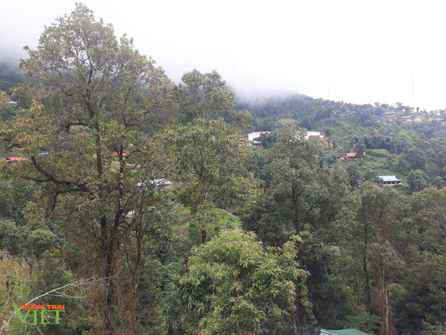 Lai Châu: Ý thức giữ rừng của người dân nâng lên, số vụ cháy rừng giảm - Ảnh 3.