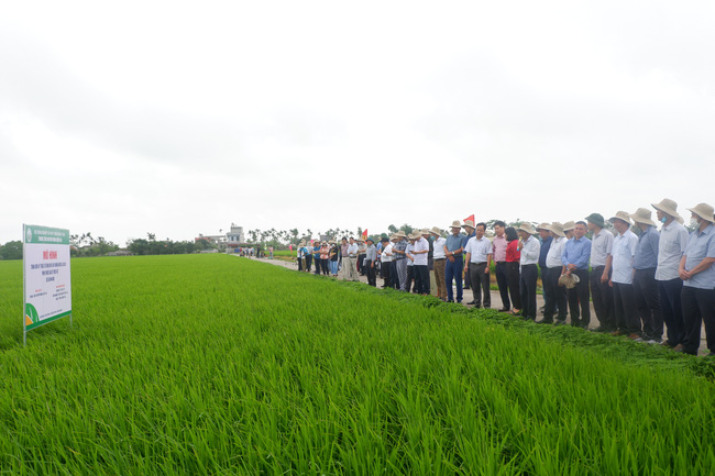 Dùng máy bay không người lái trong sản xuất lúa: Giảm sâu bệnh, nông dân nhẹ công - Ảnh 4.