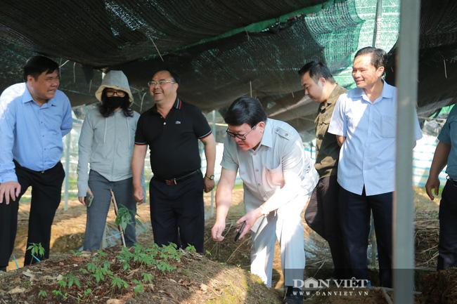 Đồng chí Thào Xuân Sùng: Đánh giá cao mô hình trồng hoa hồng của xã Sìn Hồ - Ảnh 2.
